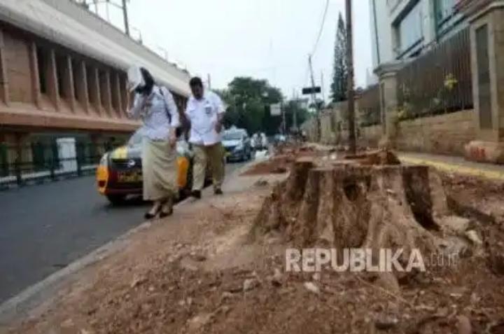 Setelah di Cikini, Pohon di Jalan Kramat Raya akan Ditebangi