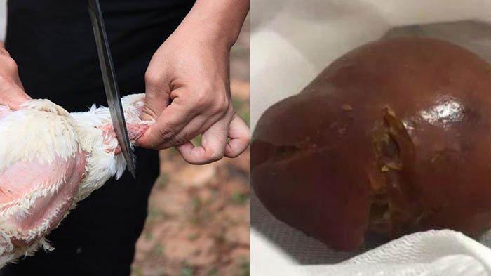 Bak Dongeng, Peternak Ayam Ini Autokaya Karena Ada Hartakarun Dalam Perut Si Ayam