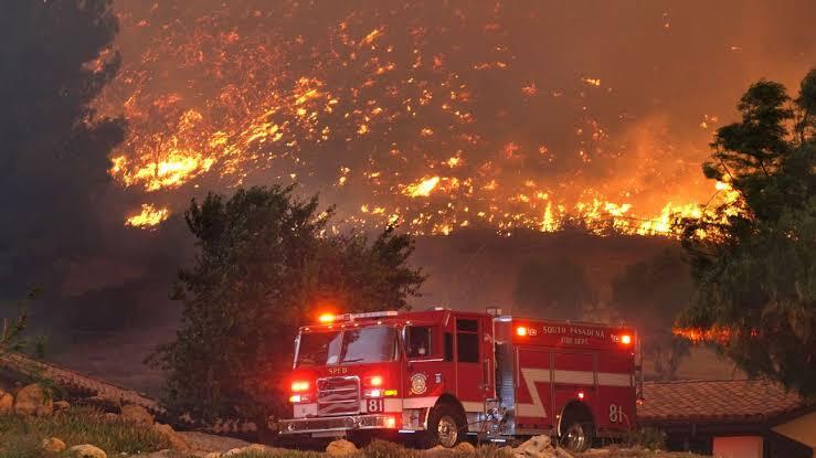 Negara Ini Memberantas Kebakaran Hutan Dengan Kambing, Apa Hubungannya Ya?