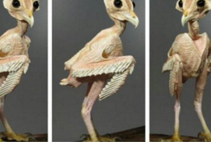 bayi burung hantu