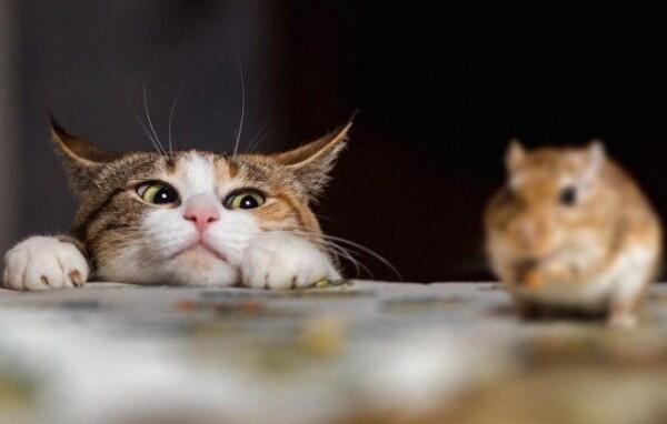 "Kenapa Kucing Suka Memberi ""Hadiah"" untuk Majikan? Ini Penjelasannya!"