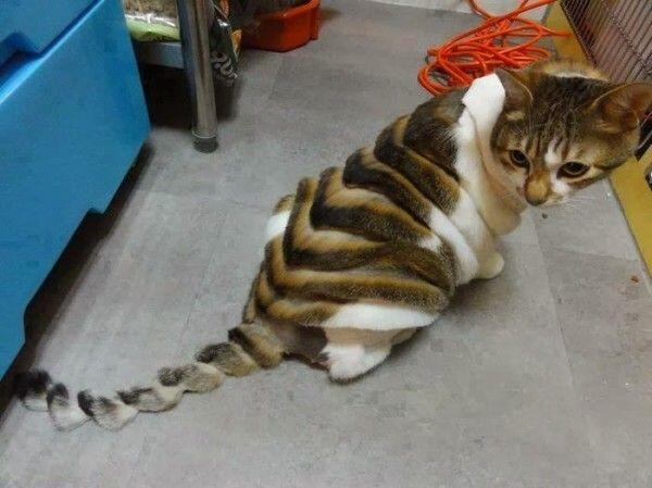 Foto-Foto Kucing dengan Gaya 'Rambut' Masa Kini, Gokil Abis!