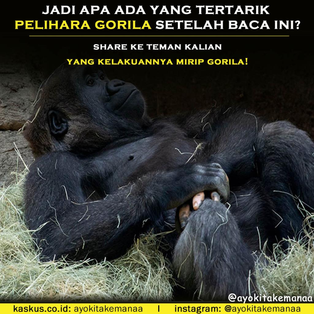 Jari Tangan Gorila Ini Membuat Heboh Orang-Orang Lantaran Menyerupai Jari Manusia