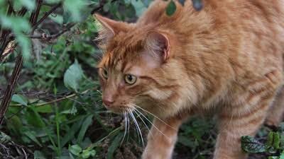 3 Cara Rahasia yang Bisa Bikin Kucingmu Selalu Nyaman Berada Di Dalam Rumah!