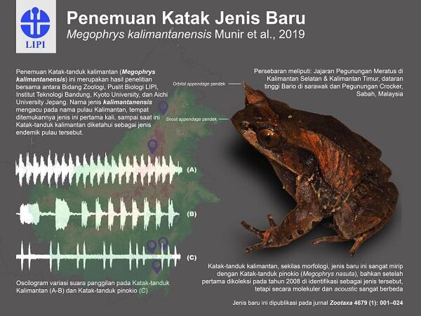 Simak 5 Fakta Katak Bertanduk Kalimantan yang Ditemukan Tahun Lalu