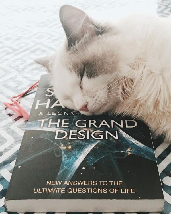 10 Potret Unyu Sherina Munaf Bersama Kucing-Kucingnya, Gemes!