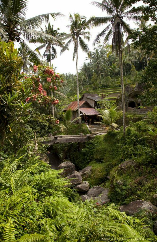 Tumbuh Subur dan Makmur di Tanah Bugis