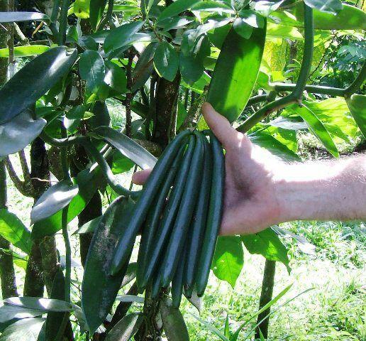 Mengapa Menjadi Pilihan Para Petani di Sinjai?