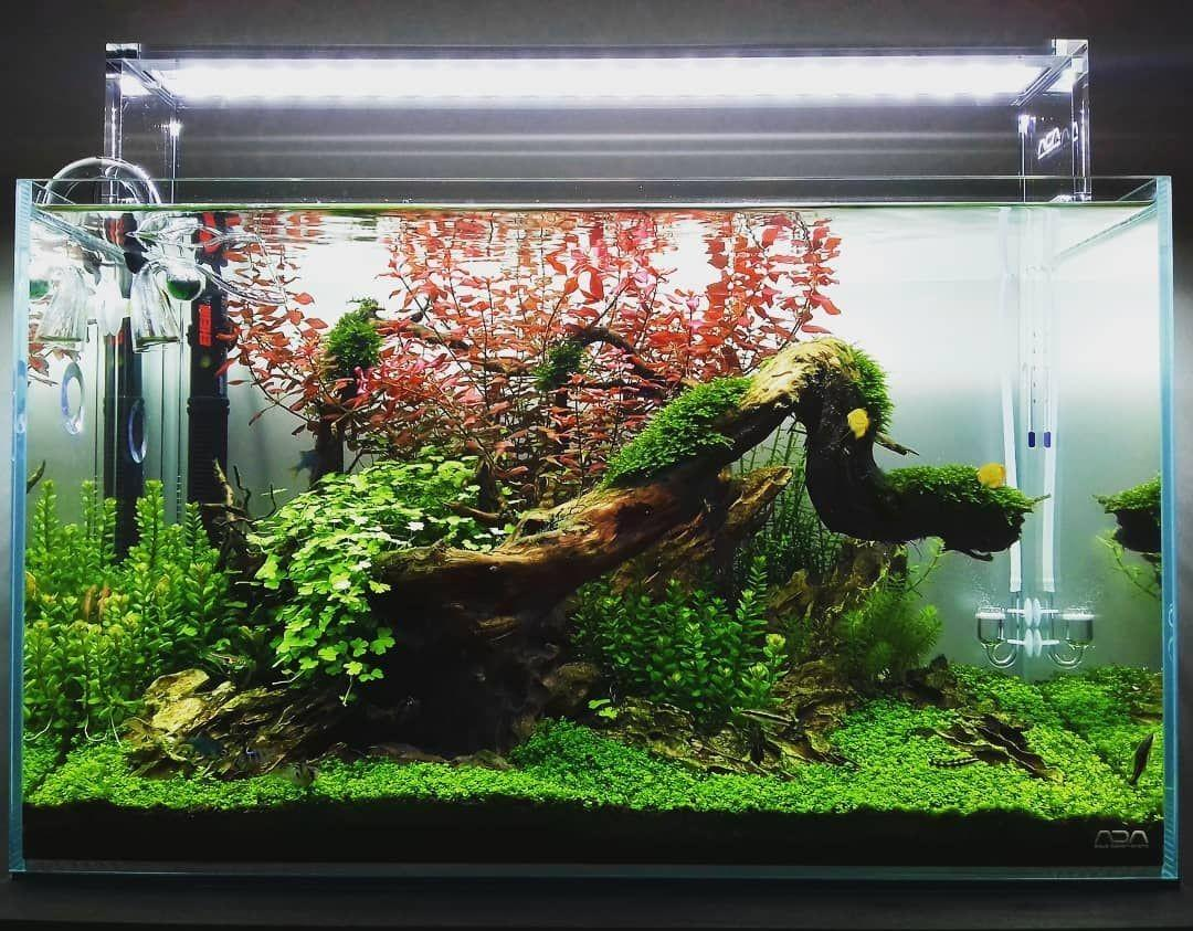 Hobby Aquascape? 3 jenis gaya pada aquascape.