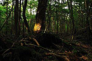 Inikah Penyebab Hutan Aokigahara Menjadi Tempat Favorit Untuk Mengakhiri Hidup?