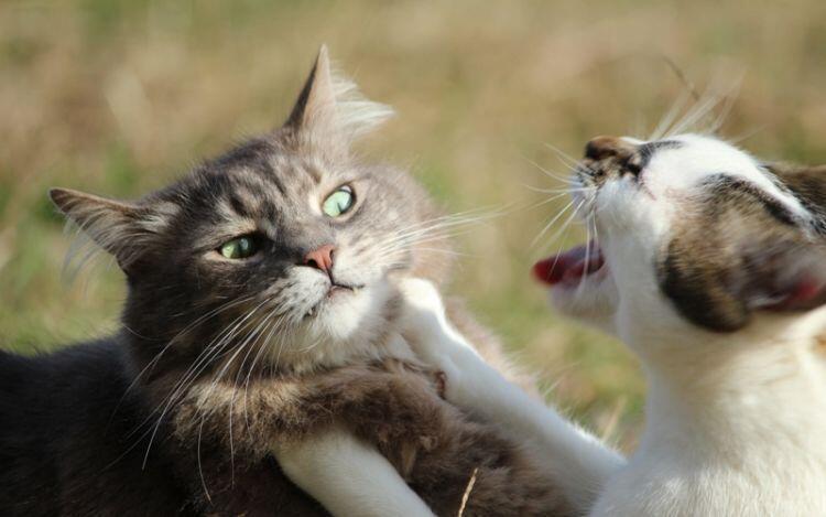 Makna Tersembunyi Dibalik 15 Kebiasaan Kucing Yang Sering Kita Lihat