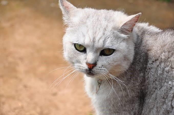 Sayang sama Kucing Peliharaan Tapi Merasa Si Kucing Tak Sayang Kamu? Perhatikan Ini!