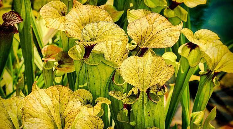 Yuk Kenali Tanaman-tanaman Apa Saja yang Suka Makan Hewan!
