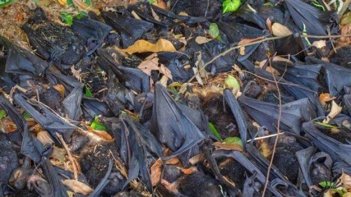 Kelelawar, Hewan Pembawa 137 Virus Penyakit