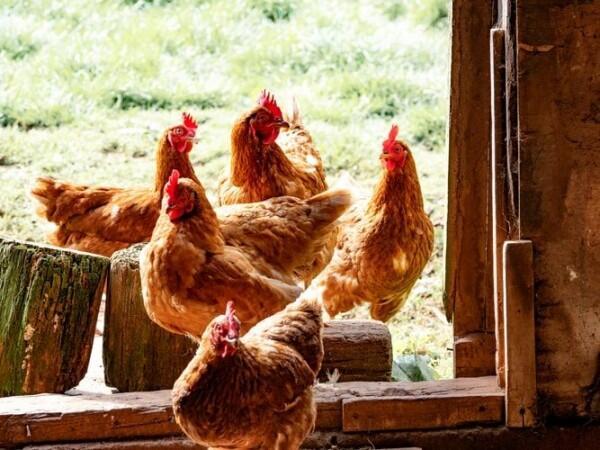 5 Jenis Daging Hewan Ini Dapat Menyebarkan Virus, Apa Saja?