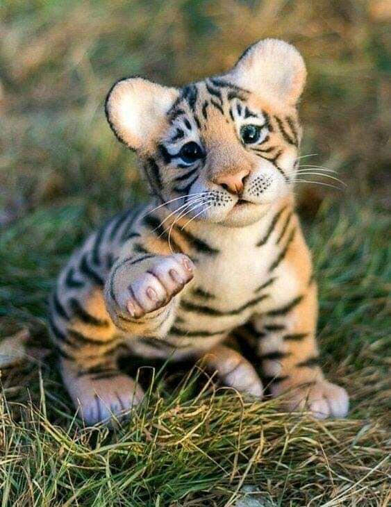 Inilah Beberapa Potret Unik Bayi Hewan, Ada Macan dan Singa. Serem Atau Menggemaskan?