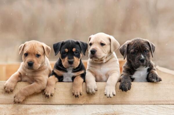 5 Tingkah laku hewan sebelum bencana