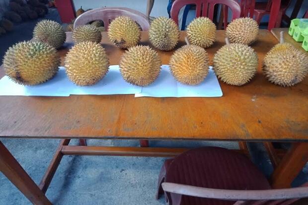 Pemkab Landak Tetapkan Induk Durian Lokal di Jelimpo