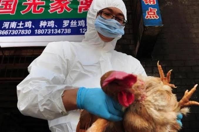 Belum Selesai Virus Corona, Flu Burung Kembali Merebak di China
