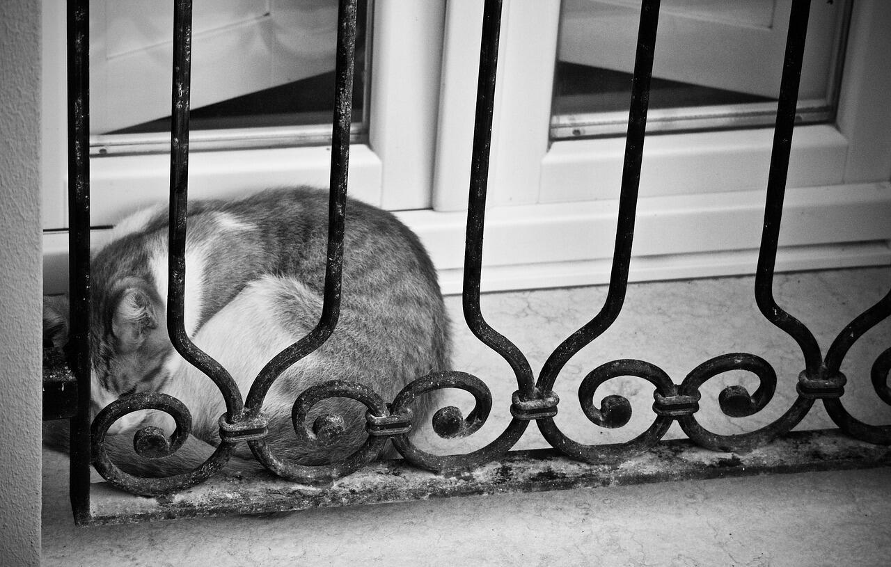 Kucing Gansis Tiba-tiba Cuek? Jangan Khawatir Gan! Ini Alasannya
