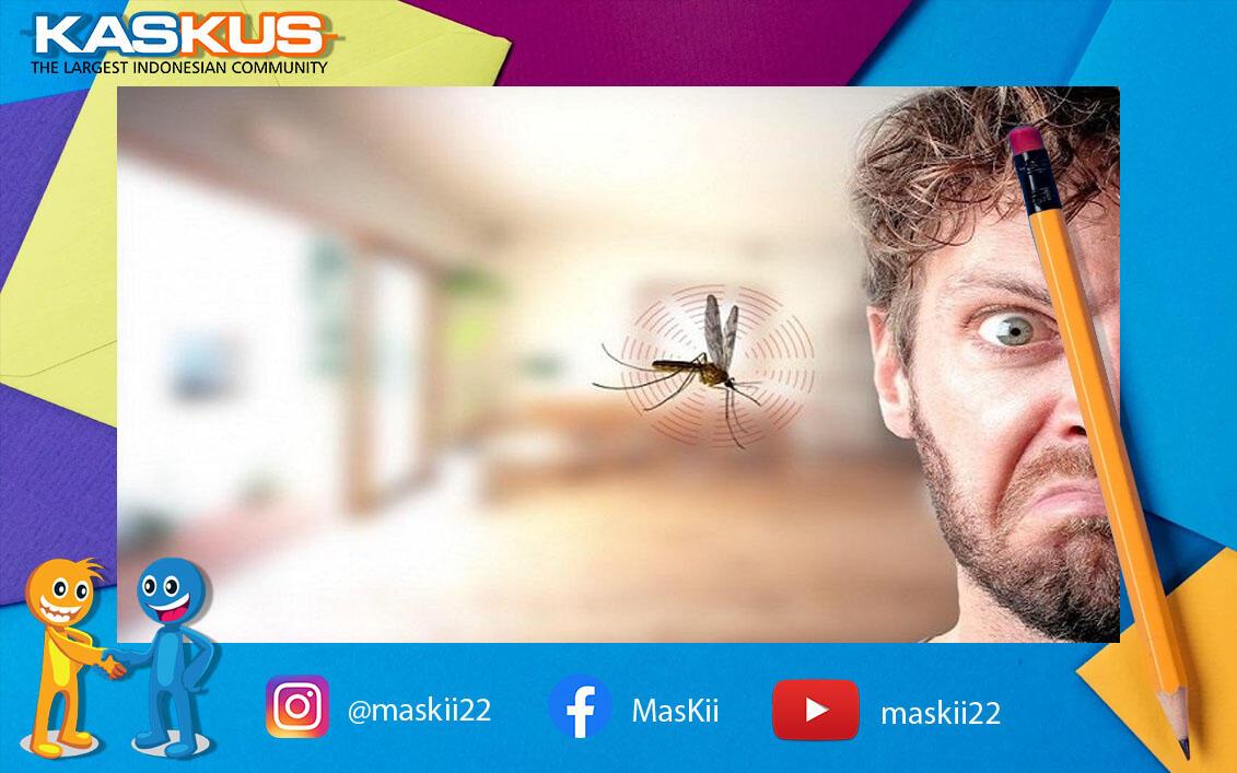 Udah Tau Belum, Apa alasan Nyamuk Suka Terbang di Area Telinga?