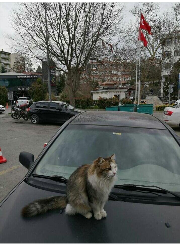 Kagum, Wanita Ini Kisahkan Hewan Liar Di Turki Melalui Postingan Facebook!
