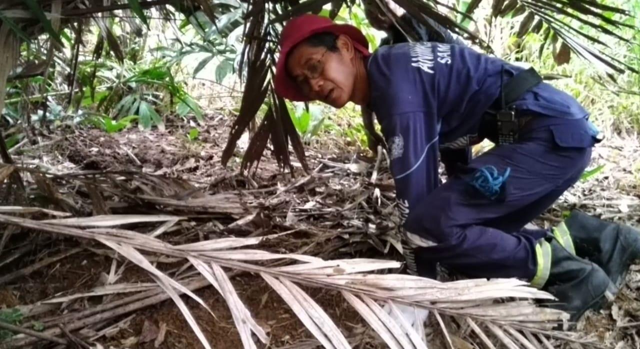 Tim SAR Temukan Jejak Beruang Madu di Samarinda, Ini Buktinya