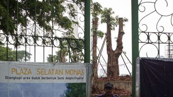 Komisi D DPRD DKI Akan tanya Pemprov soal #MisteriPohonMahoni di Monas