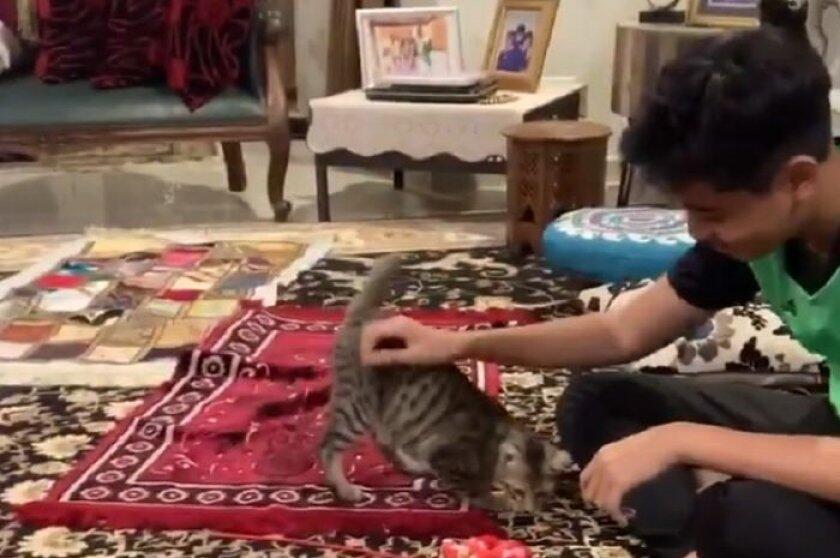Seperti Seekor Anjing, Sifat Kucing Ini Sangat Nurut dengan Majikannya