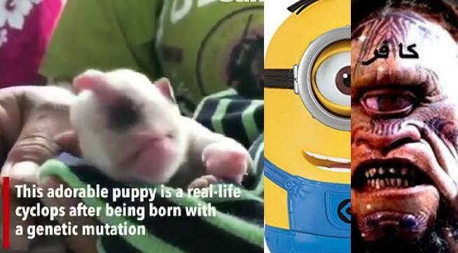 Heboh Bayi Anjing Bermata Satu dan Bertanduk di Thailand, Mirip Minion Atau Dajjal?