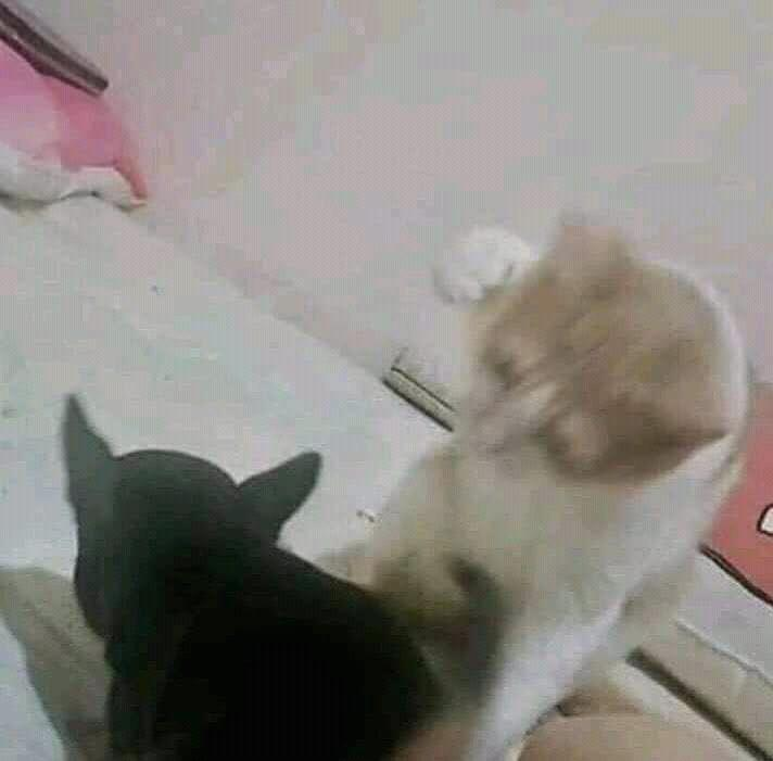 Beberapa Tingkah Laku Kucing Ini Diluar Batas Wajar Wkwkwk Yuk Liat