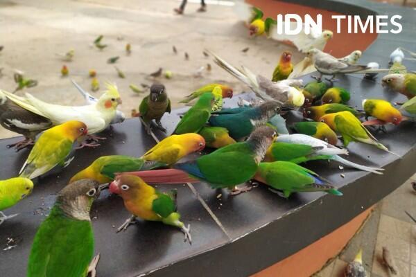 Pemkot Palembang Sidak Pasar Burung untuk Cegah Virus Corona