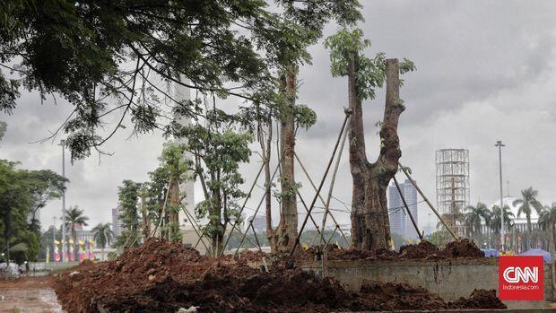 Misteri Keberadaan 190 Pohon Mahoni di Proyek Revitalisasi Anies (PSI Lapor Polisi?)