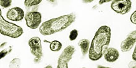 Selain Virus Corona, Inilah 5 Penyakit Berbahaya yang Ditularkan dari Hewan!