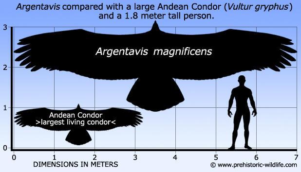 Mulai Terbentuknya Deretan Pencakar Langit Alam Tertinggi - Part 11: Neogen