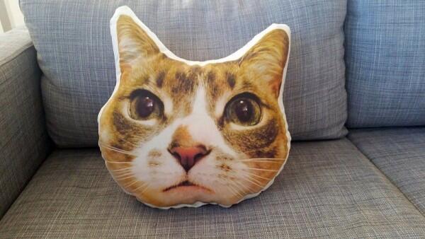 13 Kado yang Pasti Bikin Cat Lover Bahagia Gak Ketolongan