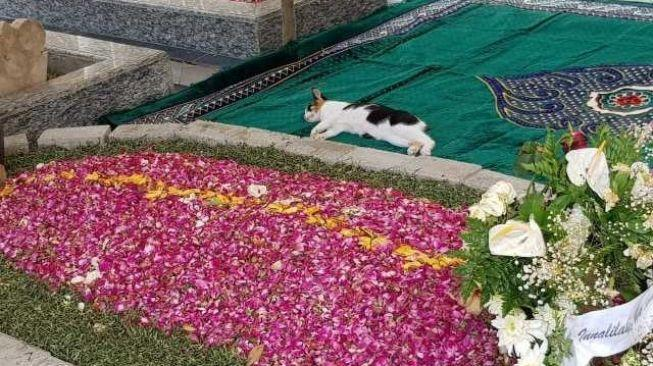 Viral Kucing Peliharaan Gus Sholah Tidur di Makam Majikan, Tak Mau Pergi