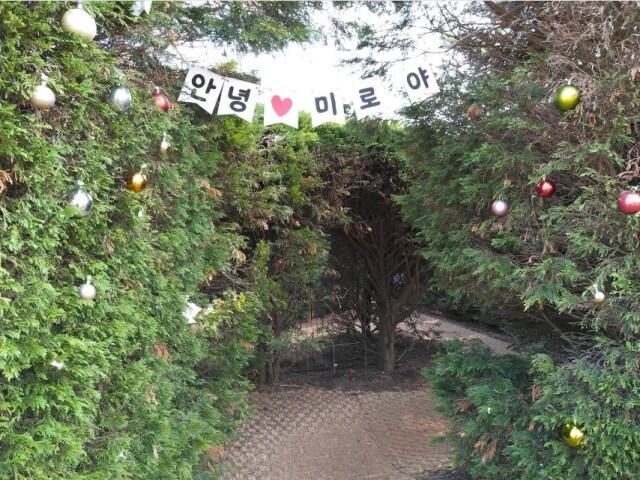Kepoin Yuk, Wisata Alam Gimnyeong Maze Park! Ada Taman Labirin sama Kucing Loh Gan