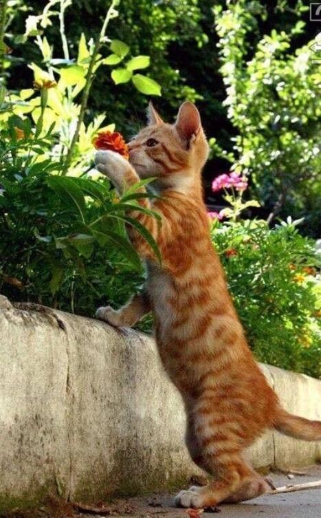 10 Foto Kucing Bar Bar Lucu