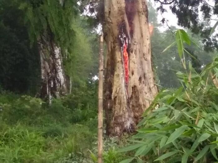 Pohon Tua di Makam Pemalang Tiba-tiba Terbakar Misterius, Mungkin Ini Penyebabnya..