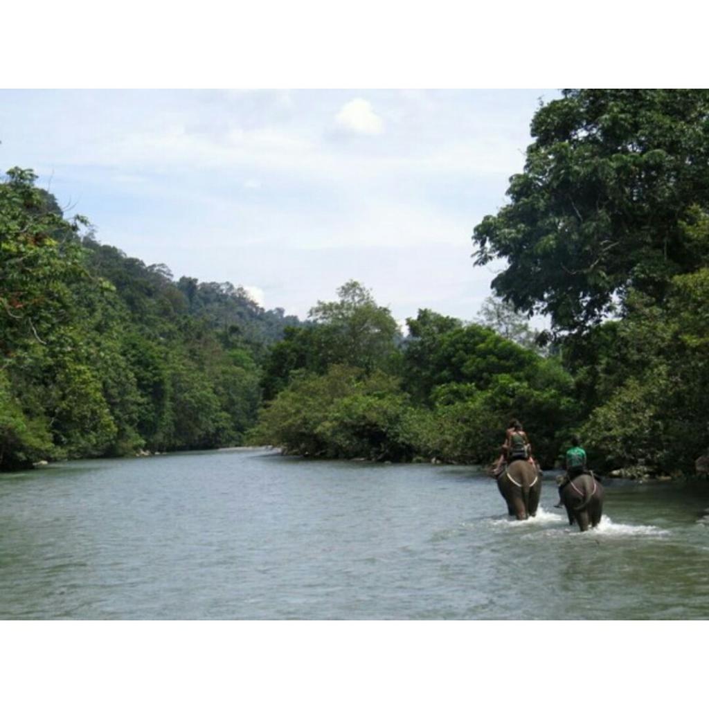 [COC Regional : Lokasi Wisata]Gunung Leuser yang Merupakan Warisan Dunia, Keren!