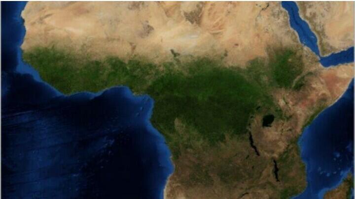 Pemerintah Rep. Kongo Siap Tebang Hutan Afrika Demi Perusahaan China,Kata Greenpeace