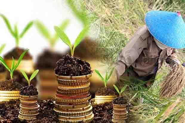 HKTI Ingatkan Kepala Daerah Harus Lindungi Lahan Pertanian