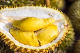 [ COC Regional : Makanan Tradisional ] Lempuk Durian Legendaris Bengkulu