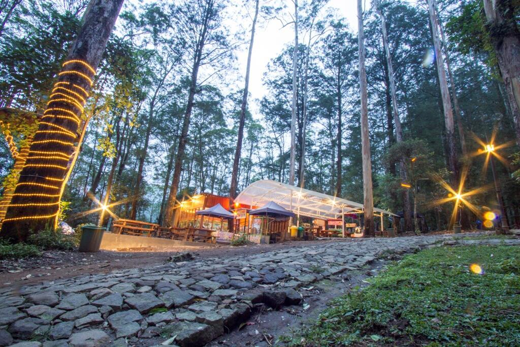 [COC Regional : Lokasi Wisata] Wisata Camping Mojosemi Forest Park