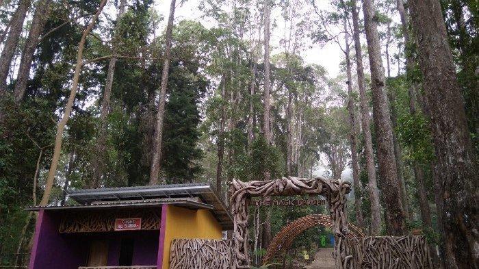 [COC Regional : Lokasi Wisata] Lawu Green Forest pesona wana wisata hutan Magetan