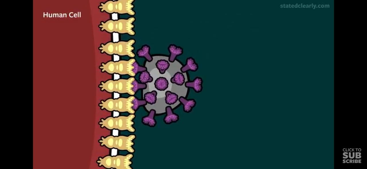 Penanganan awal corona menurut para ahli
