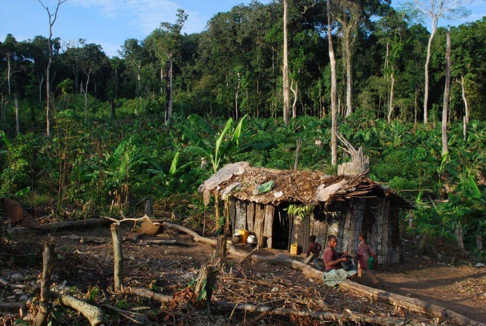 7 Negara Dengan Hutan Terluas Di Dunia, Indonesia Diurutan Berapa ?