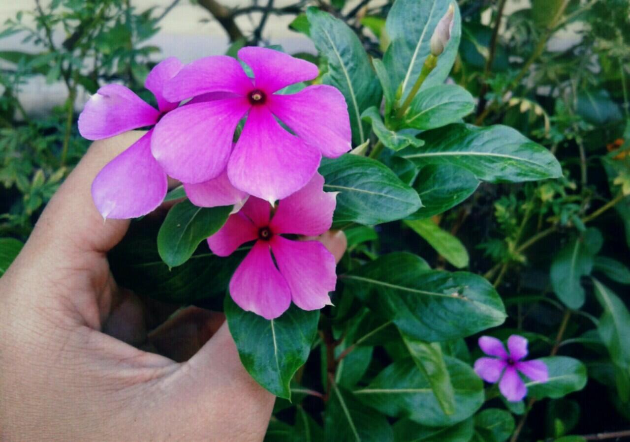 Mumpung di Rumah, Mengabadikan Keindahan Bunga-Bunga Lewat Jepretan Kamera