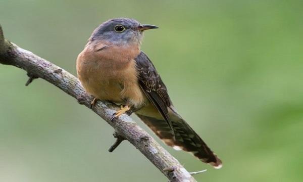 Mitos Suara Burung Membawa Kabar Kematian!